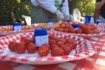 tomato-close-up